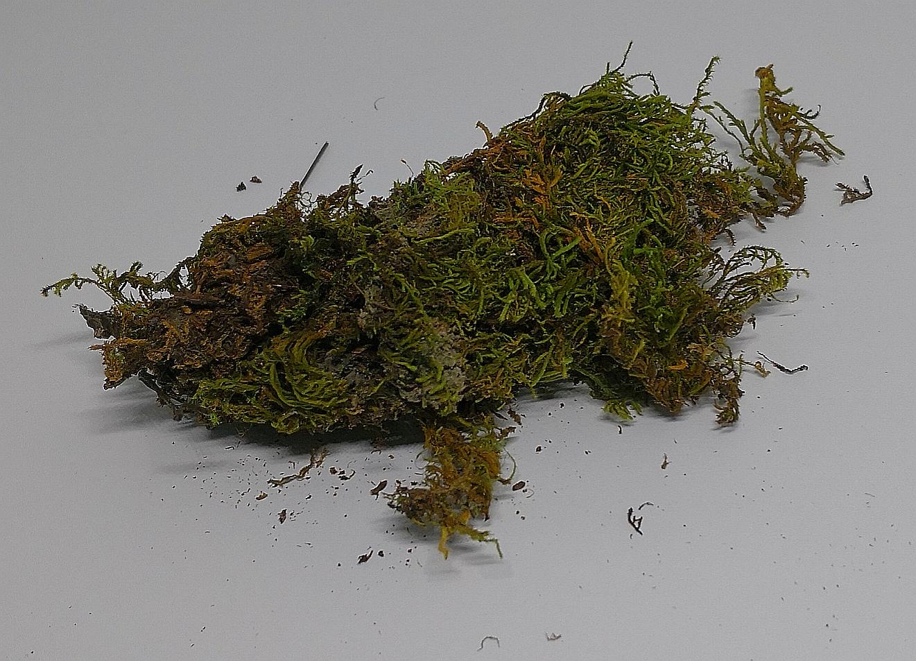 Atemberaubend Moossporen Mix 10g | Weber's Amphibien & Reptilien Shop &ET_71